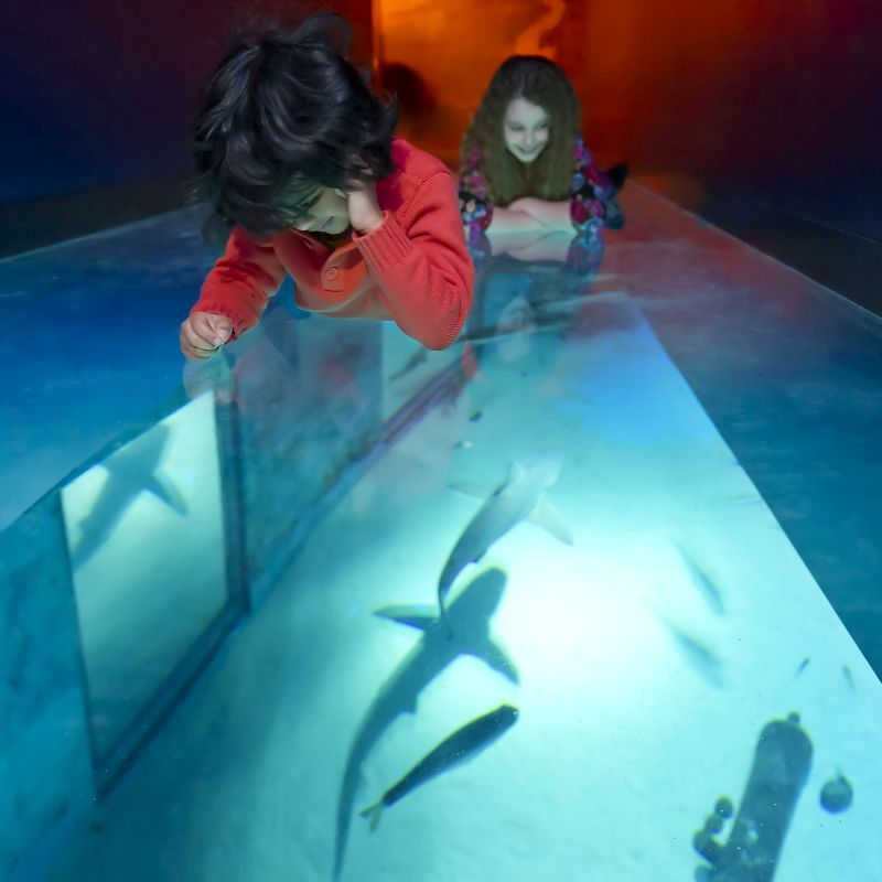 Paseo de Tiburones © Sea Life London Aquarium