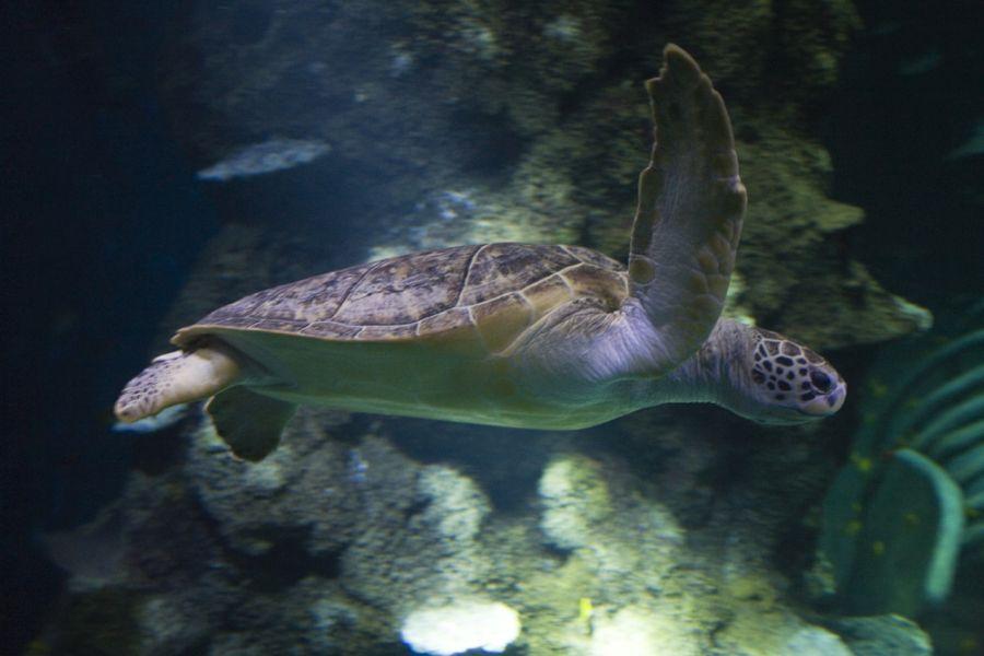 Sea Life Center, Brighton